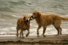 от скука кучетата се чудеха кво да правят